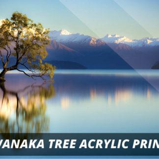 Wanaka Tree NZ Fine Art Acrylic Print A1
